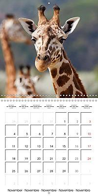 Giraffes - Swinging Elegance (Wall Calendar 2019 300 × 300 mm Square) - Produktdetailbild 11