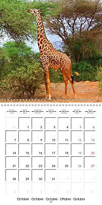 Giraffes - Swinging Elegance (Wall Calendar 2019 300 × 300 mm Square) - Produktdetailbild 10