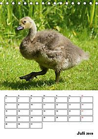 Glückliche Gänse (Tischkalender 2019 DIN A5 hoch) - Produktdetailbild 7
