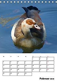 Glückliche Gänse (Tischkalender 2019 DIN A5 hoch) - Produktdetailbild 2
