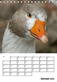 Glückliche Gänse (Tischkalender 2019 DIN A5 hoch) - Produktdetailbild 1