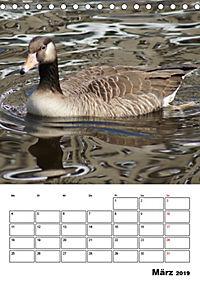 Glückliche Gänse (Tischkalender 2019 DIN A5 hoch) - Produktdetailbild 3
