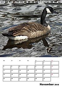 Glückliche Gänse (Tischkalender 2019 DIN A5 hoch) - Produktdetailbild 11