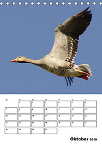 Glückliche Gänse (Tischkalender 2019 DIN A5 hoch) - Produktdetailbild 10