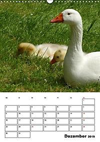 Glückliche Gänse (Wandkalender 2019 DIN A3 hoch) - Produktdetailbild 12