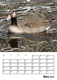 Glückliche Gänse (Wandkalender 2019 DIN A3 hoch) - Produktdetailbild 3