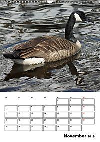 Glückliche Gänse (Wandkalender 2019 DIN A3 hoch) - Produktdetailbild 11
