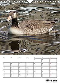 Glückliche Gänse (Wandkalender 2019 DIN A4 hoch) - Produktdetailbild 3