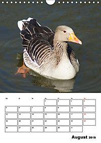 Glückliche Gänse (Wandkalender 2019 DIN A4 hoch) - Produktdetailbild 8