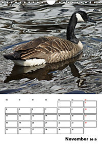 Glückliche Gänse (Wandkalender 2019 DIN A4 hoch) - Produktdetailbild 11