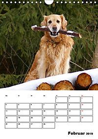 Glücklicher Golden Retriever (Wandkalender 2019 DIN A4 hoch) - Produktdetailbild 2