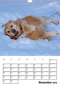 Glücklicher Golden Retriever (Wandkalender 2019 DIN A4 hoch) - Produktdetailbild 12