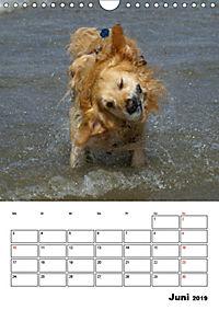 Glücklicher Golden Retriever (Wandkalender 2019 DIN A4 hoch) - Produktdetailbild 6