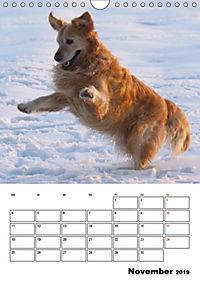 Glücklicher Golden Retriever (Wandkalender 2019 DIN A4 hoch) - Produktdetailbild 11