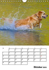 Glücklicher Golden Retriever (Wandkalender 2019 DIN A4 hoch) - Produktdetailbild 10