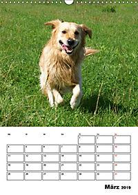 Glücklicher Golden Retriever (Wandkalender 2019 DIN A3 hoch) - Produktdetailbild 3