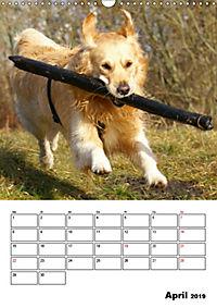 Glücklicher Golden Retriever (Wandkalender 2019 DIN A3 hoch) - Produktdetailbild 4