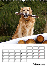 Glücklicher Golden Retriever (Wandkalender 2019 DIN A3 hoch) - Produktdetailbild 2