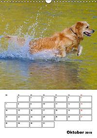 Glücklicher Golden Retriever (Wandkalender 2019 DIN A3 hoch) - Produktdetailbild 10