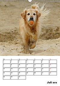 Glücklicher Golden Retriever (Wandkalender 2019 DIN A3 hoch) - Produktdetailbild 7