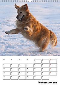 Glücklicher Golden Retriever (Wandkalender 2019 DIN A3 hoch) - Produktdetailbild 11