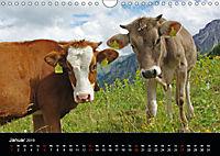 Glückliches Rindvieh 2019 (Wandkalender 2019 DIN A4 quer) - Produktdetailbild 1