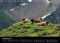 Glückliches Rindvieh 2019 (Wandkalender 2019 DIN A4 quer) - Produktdetailbild 11