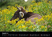 Glückliches Rindvieh 2019 (Wandkalender 2019 DIN A4 quer) - Produktdetailbild 8