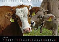 Glückliches Rindvieh 2019 (Wandkalender 2019 DIN A4 quer) - Produktdetailbild 6