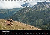 Glückliches Rindvieh 2019 (Wandkalender 2019 DIN A4 quer) - Produktdetailbild 9