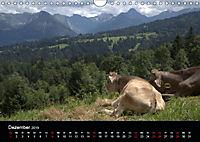 Glückliches Rindvieh 2019 (Wandkalender 2019 DIN A4 quer) - Produktdetailbild 12