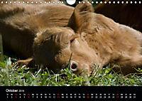 Glückliches Rindvieh 2019 (Wandkalender 2019 DIN A4 quer) - Produktdetailbild 10