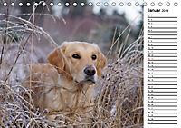 Goldig durch das Jahr! (Tischkalender 2019 DIN A5 quer) - Produktdetailbild 1