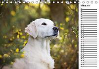 Goldig durch das Jahr! (Tischkalender 2019 DIN A5 quer) - Produktdetailbild 3