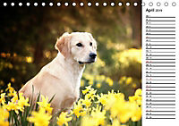 Goldig durch das Jahr! (Tischkalender 2019 DIN A5 quer) - Produktdetailbild 4