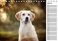 Goldig durch das Jahr! (Tischkalender 2019 DIN A5 quer) - Produktdetailbild 7