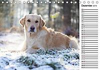 Goldig durch das Jahr! (Tischkalender 2019 DIN A5 quer) - Produktdetailbild 12