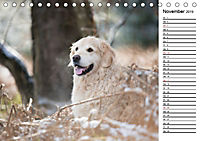 Goldig durch das Jahr! (Tischkalender 2019 DIN A5 quer) - Produktdetailbild 11