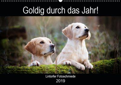 Goldig durch das Jahr! (Wandkalender 2019 DIN A2 quer), Jennifer Bohlmann