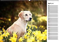 Goldig durch das Jahr! (Wandkalender 2019 DIN A2 quer) - Produktdetailbild 4