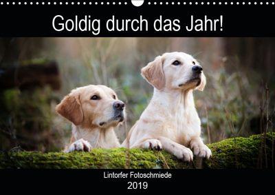 Goldig durch das Jahr! (Wandkalender 2019 DIN A3 quer), Jennifer Bohlmann