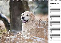 Goldig durch das Jahr! (Wandkalender 2019 DIN A3 quer) - Produktdetailbild 11