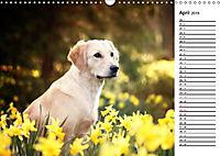 Goldig durch das Jahr! (Wandkalender 2019 DIN A3 quer) - Produktdetailbild 4