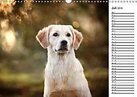 Goldig durch das Jahr! (Wandkalender 2019 DIN A3 quer) - Produktdetailbild 7