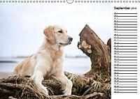Goldig durch das Jahr! (Wandkalender 2019 DIN A3 quer) - Produktdetailbild 9