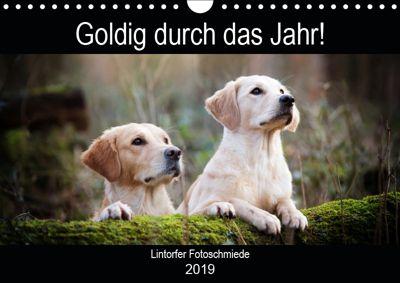 Goldig durch das Jahr! (Wandkalender 2019 DIN A4 quer), Jennifer Bohlmann