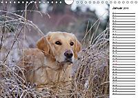 Goldig durch das Jahr! (Wandkalender 2019 DIN A4 quer) - Produktdetailbild 1