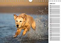 Goldig durch das Jahr! (Wandkalender 2019 DIN A4 quer) - Produktdetailbild 6