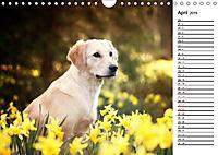 Goldig durch das Jahr! (Wandkalender 2019 DIN A4 quer) - Produktdetailbild 4