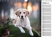 Goldig durch das Jahr! (Wandkalender 2019 DIN A4 quer) - Produktdetailbild 10